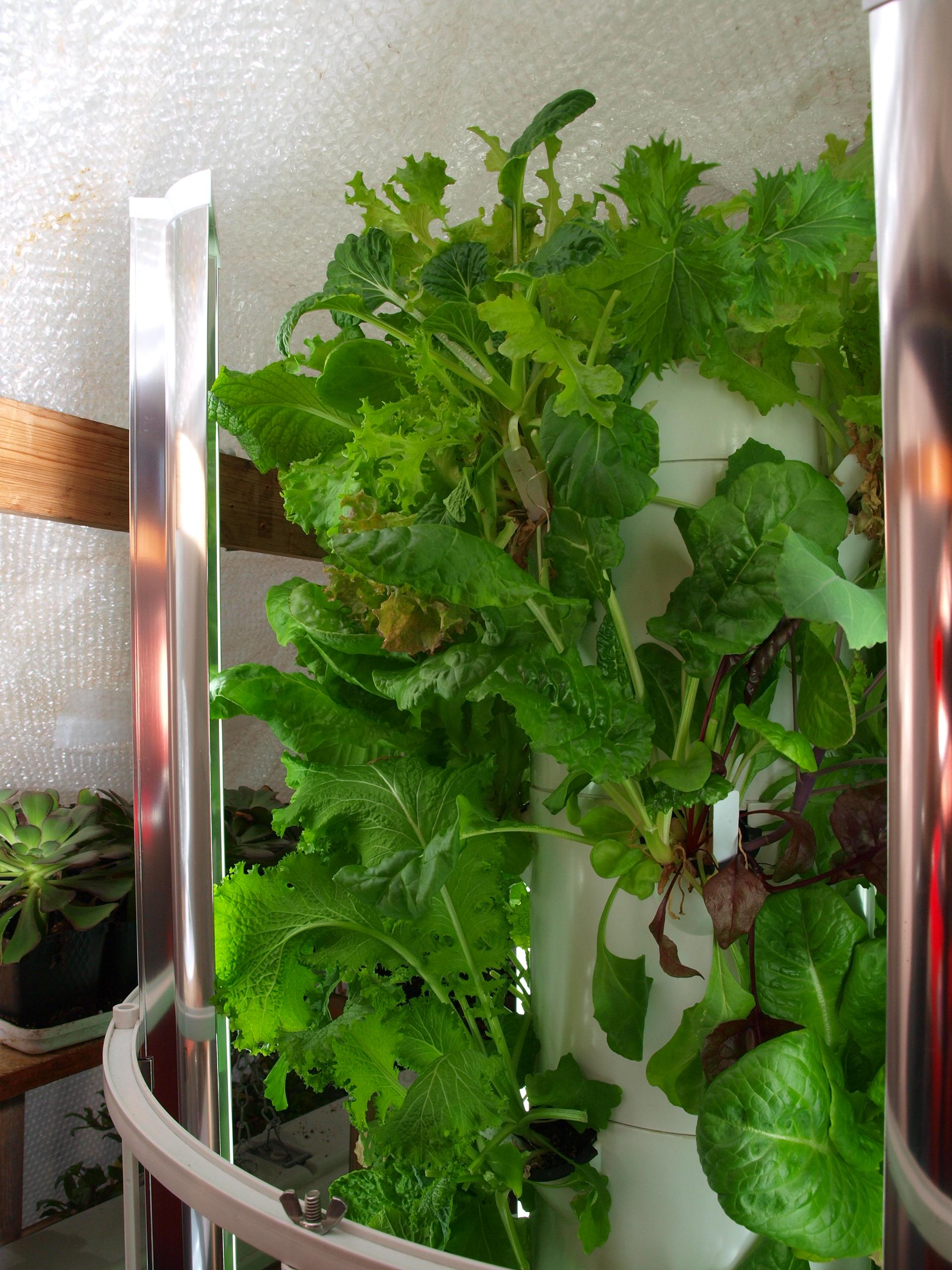 Tower Garden is a Lettuce Growing Machine
