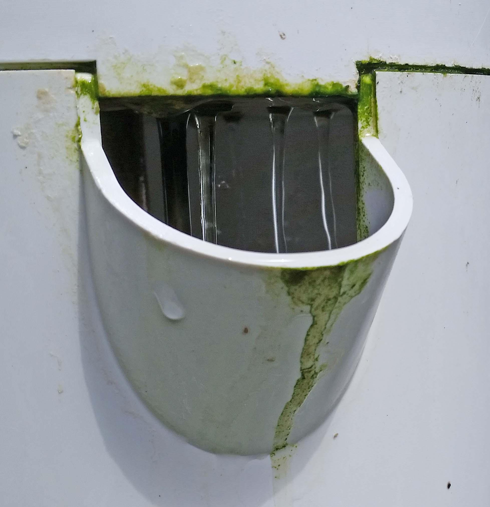vertical garden green algae
