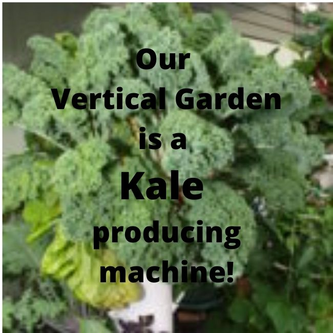 Vertical Garden Is A Kale Producing Machine!