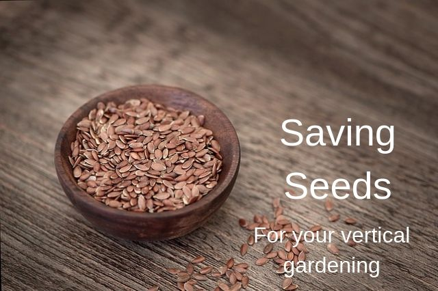 Save seeds when you harvest your vertical garden.