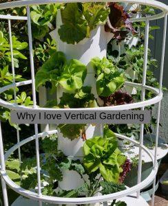 Why I Love Vertical Gardening