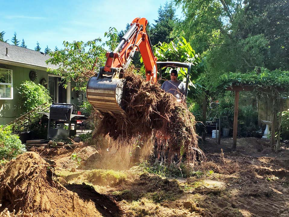 Removing tree stumps with mini-excavator.