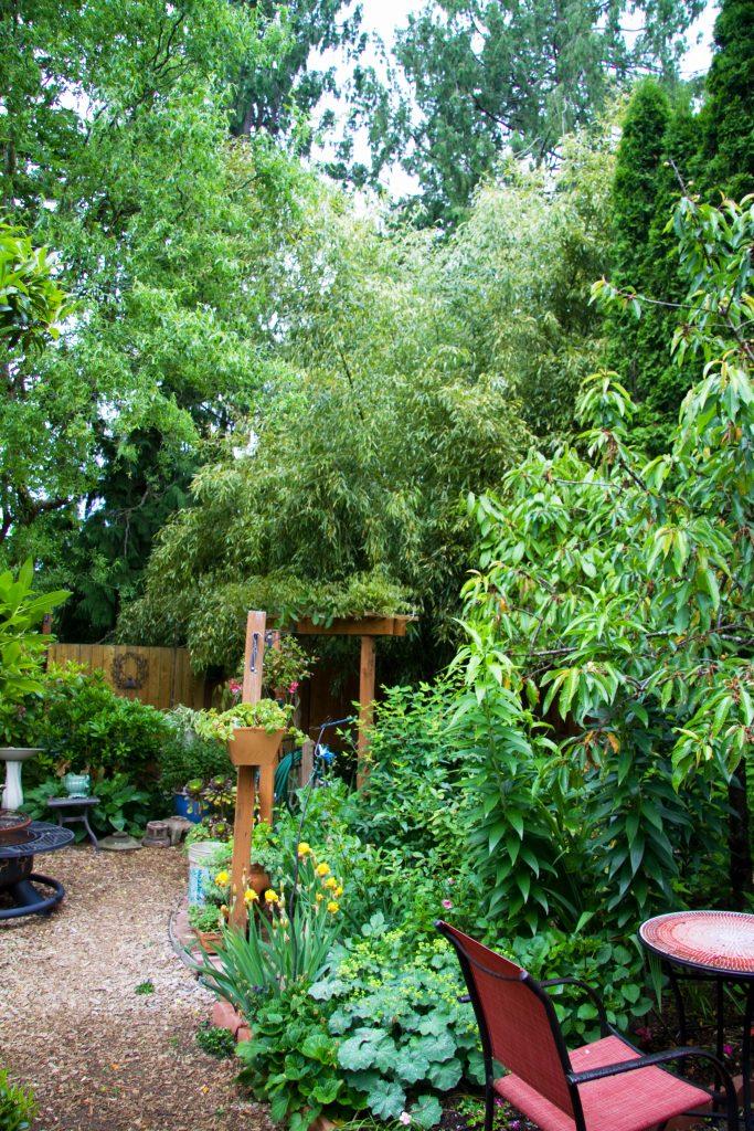 Backyard view of bamboo plant.
