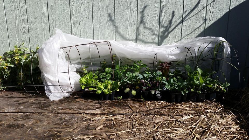 Avoiding Transplant Shock in Seedlings