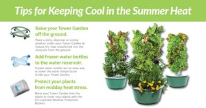 Keeping Vertical Garden Cool in Summer Heat