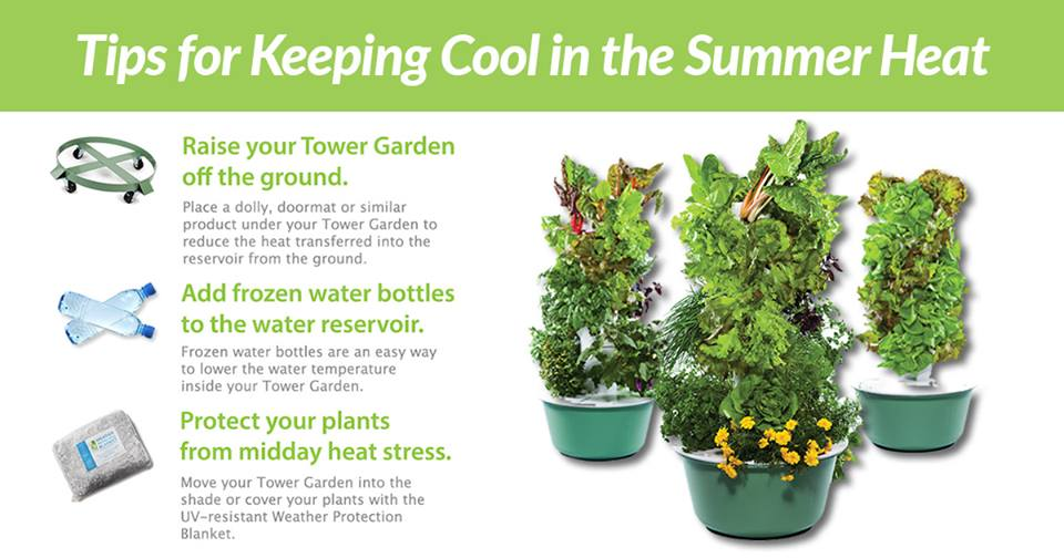 Keeping Tower Garden cool in summer heat
