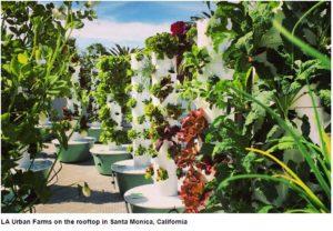 Tower Gardens vital in Urban Vertical Gardening