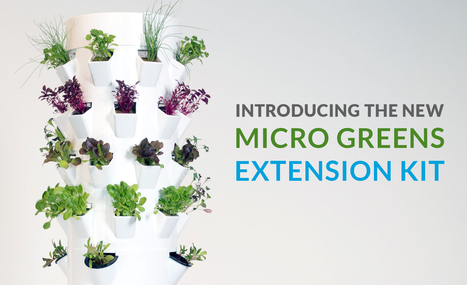 Microgreens-Growing-Microgreens