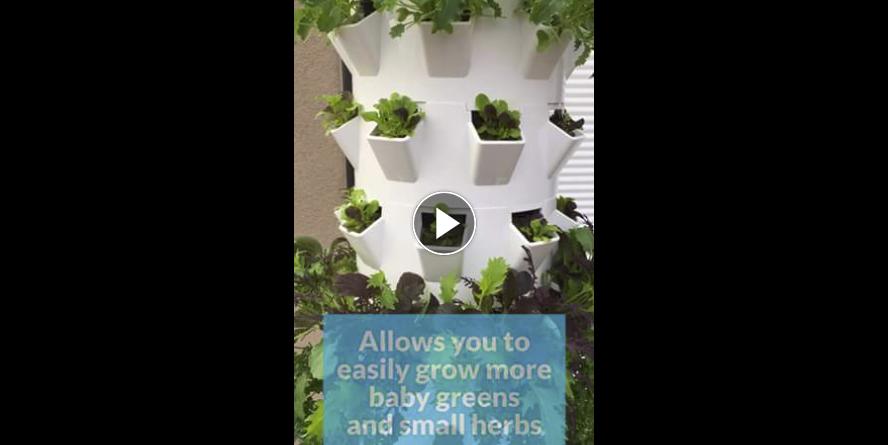Microgreens-Micro-Greens