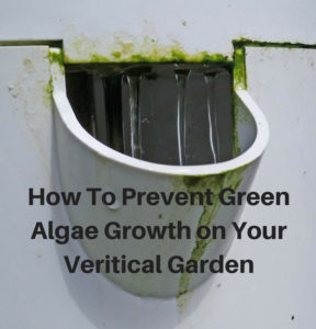 How To Prevent Green Algae Growth On Your Vertical Garden