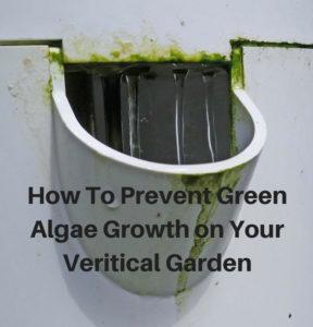 vertical garden algae growth