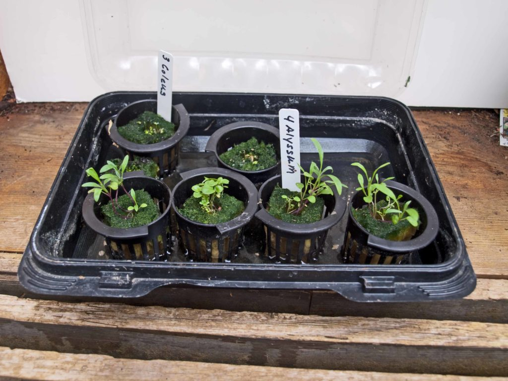 Hardening Off Seedlings