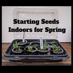 Starting Seeds Indoors for Spring Planting