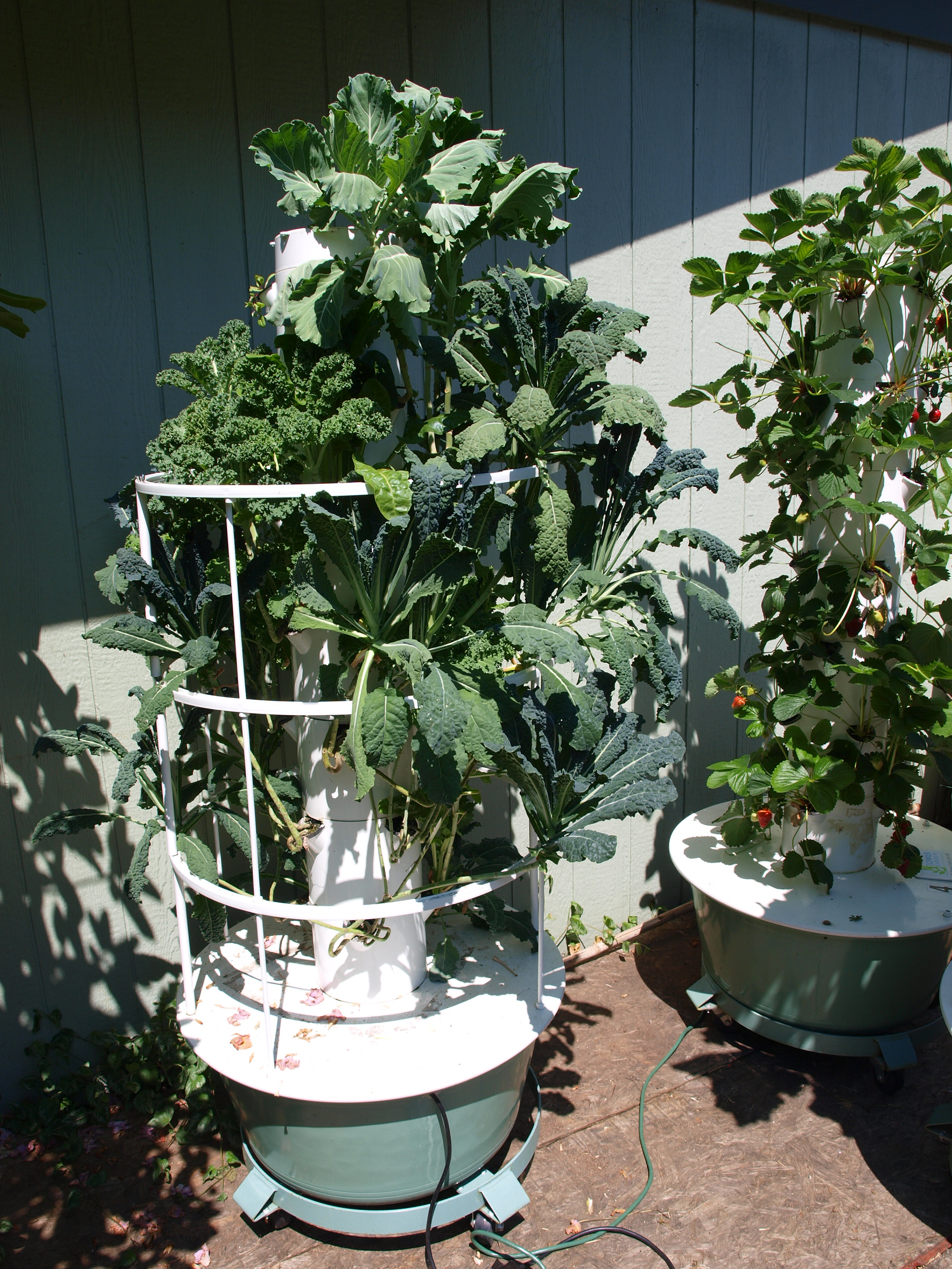 Photo of Tower Garden with long stem chard and kale plants