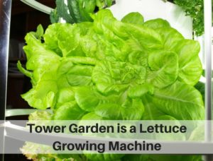 Vertical Garden is a Lettuce Growing Machine